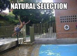 Swimming Pool Meme - epic pix like 9gag just funny remove yourself from my gene pool