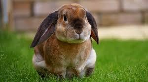 rabbit garden rabbit garden bunny free photo on pixabay