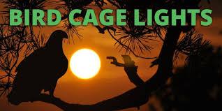 is full spectrum lighting safe avian full spectrum lighting for birds parrot lights and bird uv lights