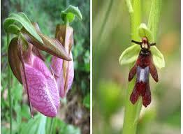 slipper flower orchid flowers a the pink s slipper orchid cypripedium