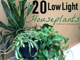plants that need low light best low light plants onewayfarms com