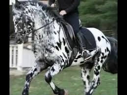 59 best horses images on pinterest gray horse horses and lemur