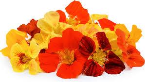 nasturtium flower nasturtiums flowers information recipes and facts