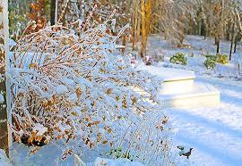 Winter Garden Jobs - jobs to do in january uk here we grow