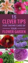 Plant Flower Garden - best 20 flower garden layouts ideas on pinterest spring hill