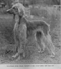 afghan hound breed afghan hound times ephemera index page1