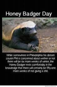 Honey Badger Meme - dawn purdham lawrence this is for you honey badger day honey