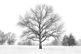 merry snow tree photography