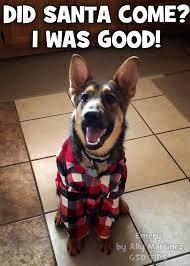 Christmas Dog Meme - did santa come i was good christmas christmas quotes christmas humor