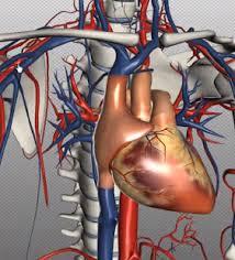 Google Human Anatomy Human Anatomy Learning Android Apps On Google Play