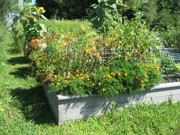 community garden feedback design for generations