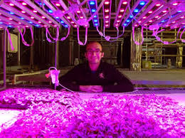 philips led grow light purdue university investigating the effects of leds