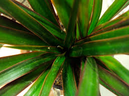 Small Black Flying Bugs In Bathroom Fungus Gnats Good To Grow