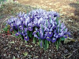 the basics of bulb planting state by state gardening web articles