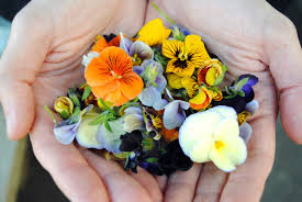 edible flowers edible flowers 101 how to choose use blooms open for