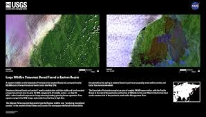 Canada Wildfire Satellite by Earthview U2013large Wildfire Consumes Boreal Forest In Eastern Russia