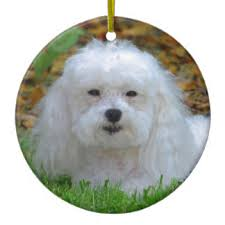 maltipoo dogs ornaments keepsake ornaments zazzle