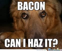 Dog Bacon Meme - dog want bacon by thezephyrishere meme center