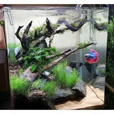 Aquascape Com 30 X 30 X 35 Cm Fish Freshwater And Aquarium Pinterest