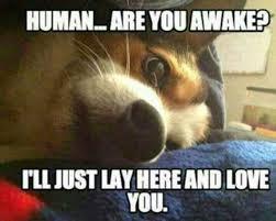 Hyper Dog Meme - top 10 hilarious dog memes marriage family home family