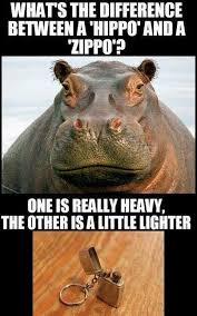 Hippo Memes - elegant 15 best hippo memes images on pinterest testing testing