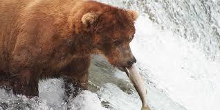 Alaska wildlife images Travel alaska wildlife viewing in alaska jpg