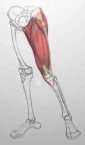 26 best anatomy images on pinterest drawings drawing hands and