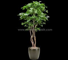 artificial black olive tree commercial silk int l