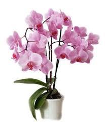 plantes dépolluantes chambre à coucher plante salle de bain ikeasia com
