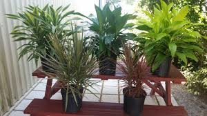 dracaena dracaena u2013 michaels nursery