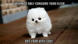 Dog Doctor Meme - looks can deceiving meme by doctorfreddy on deviantart