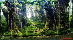 100 aquascape ideas aquariums aquascaping and vivarium