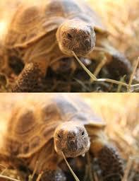 Tortoise Meme - create meme turtle turtle turtle tortoise pictures meme