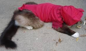 Ferret Costumes Halloween Cat Halloween Costumes Kmart