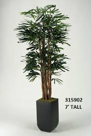 Square Metal Planter by 7 U0027 Lady Palm In Tall Square Metal Planter