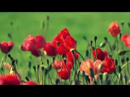 Nice Flowers Awesome Very Nice Flowers In The World Must See Youtube