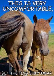 Meme Horse Head - horse ass and head memes imgflip