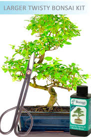 indoor bonsai tree meanings bonsai care