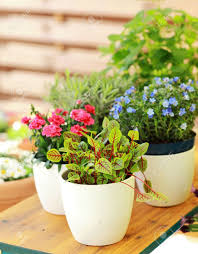 outdoor flower pots for small garden patio or terrace stock photo