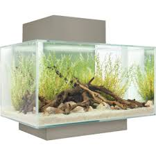 the modern fluval edge aquarium review and setup guide