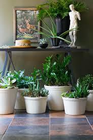 363 best house plants images on pinterest house plants indoor