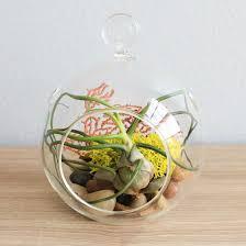 air plant terrarium globe displays for tillandsia hanging glass