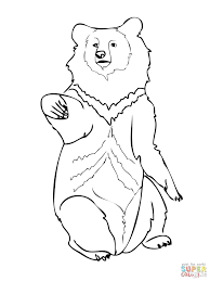 hibernating bear coloring pages free polar bears book teddy cubs