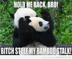 Funny Panda Memes - funny animal memes part 5