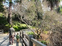 Uc Berkeley Botanical Gardens Botanical Gardens At Uc Berkeley