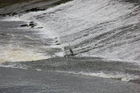 Seeking Dinner Stork Seeking Dinner At The Weir In Bennetsbridge Picture Of