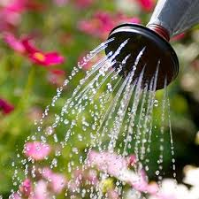 how and when to water take the mystery out of watering the garden