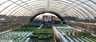aquaponics alive pros and cons of different system types