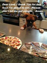 boxer dog youtube best 25 funny boxer puppies ideas on pinterest boxer puppies