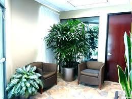 best indoor house plants best plants for living room artificial house plants living room best